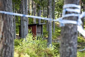 Mord vid Stensjön