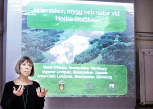 Myggen vid Nedre Dalälven har engagerat Barbro Holmberg.