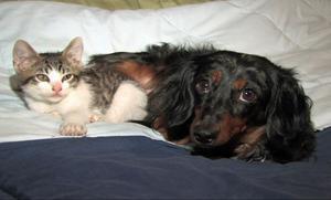 Rädslan att förlora älskade husdjur får människor att stanna kvar i en våldsrelation med hugg och slag. Där vill Voov stötta och ta hand om djuren tills ägaren själv förmår göra det efter uppbrottet.