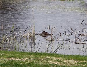 En svarthakedopping i en av dammarna på golfbanan blev första studieobjektet.