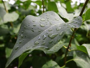Macrobilder är en favorit, här ett löv i min kompis trädgård just efter regnet lagt sig.