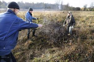 Städdag. Gert Straschewski, Lars Hansén och Yvonne Larsson, Roslagens ornitologiska förening röjer småsly och laddar brasan. I bakgrunden har nästa gäng redan fått fyr på sin hög.