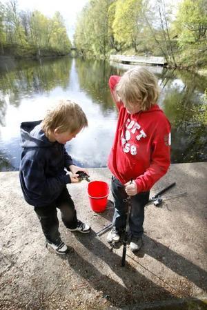 I Dalbritas damm fångade Erik och Karl en sköldpadda med håv. De la sköldpaddan i en påse med vatten och körde den hem till Erik.