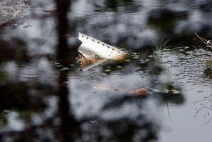 En bit av stjärtfenan sticker fortfarande upp ur vattnet, 56 år efter kraschen.