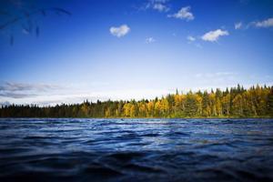Vattennivån i Hårkan har de senaste dagarna varit högt. Men än finns det ingen fara för att fritidshus längs vattnet ska vara i fara.