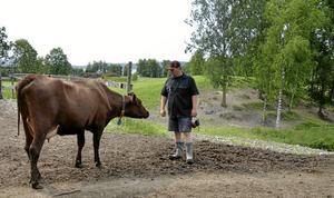 ARBETSKAMRATER. Johan Linderkers driver ekologiskt lantbruk på Röda gården sedan 2011. På gården finns 150 kor plus kvigor och kalvar. Foto: Helena Björk