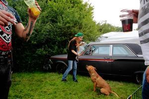 En skylt som varnade för hunden vid tältet avskräckte inte många. Hunden Gramse fick snabbt många nya vänner.
