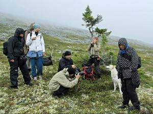 Gudruns foto- och modellteam samt Lisa Öberg. Hunden Rasmus (som gett granen Old Rasmus dess namn) fick som synes också mycket uppmärksamhet! Granen på bilden heter Old Raisa och är minst 2 300 år gammal.