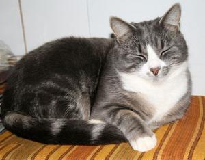 Elsie-Britts ögonsten, ettårige katten Micke, som matte också kallar