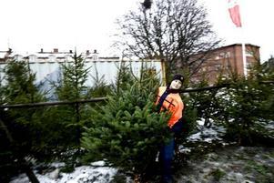 """Lokalt odlad. Jessika Horttanainen säljer granar som odlats i Hedesunda. """"Många tycker att det är bra att de odlats i närheten"""", berättar hon."""