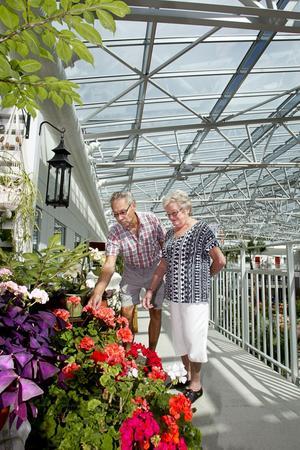 Grönska inomhus. Efter den senaste tidens kraftiga skyfall bestämde Björn och Ulla-Britt Dahlin att flytta växterna från balkongen till farstun på loftgången.