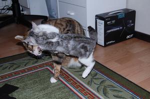Att attackera kompisen Hubbe när han inte vill är en vana som lilla Elza har.