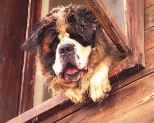 """charmtroll i bulgarien.""""Här är en hund som vi stötte på i Bulgarien i somras i den lilla staden Nessebar. Han var ett riktigt litet charmtroll."""" Foto: Christina  Taraldsson, Lit."""