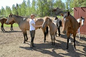 Redan i gång. Hästpensionatet på CM Ranch har redan smugit i gång. Elva hästar i blandande raser finns nu på gården, fyra är Carolines och Magnus egna, resten är inackorderade. I vintras gick 16 hästar på                      gården.