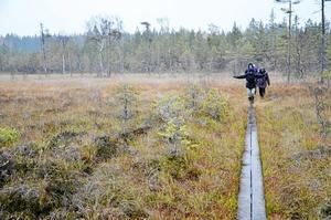 Mossmark. Det är två mossar i Laxå kommun som har väckt Länsstyrelsens intresse, Stora Gåssjömossen och Julömossen. Båda mossarna har artrik flora och fauna.Arkivfoto: Jan Wijk