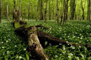 Ge dig ut på upptäcktsfärd i skogen i sommar.