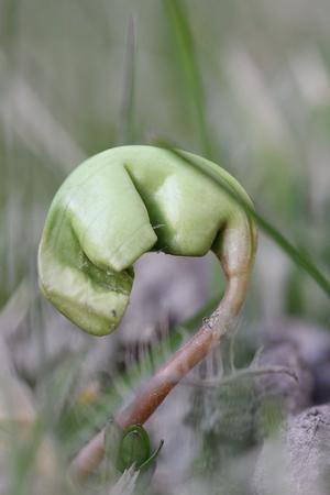 Här växer det så det knakar.