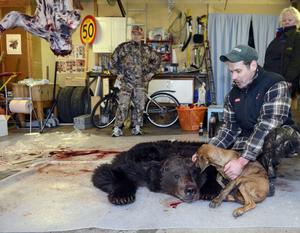 Jalle Spånberg och hunden Plott med skinnet från den stora björnhane som blev den sista björnen som fälldes i årets licensjakt på björn i Dalarna.