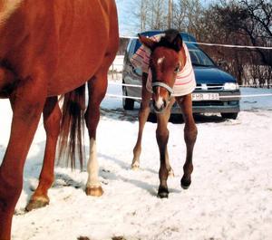 Sina första två år bodde Märta på gården i Hedesunda. Som föl var hon brun, sedan bytte hon färg till gråvit.