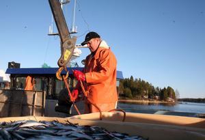 Det blir allt färre yrkesfiskare. Johan Blomqvist drygar ut säsongen genom att åka söderut och tråla efter strömming.