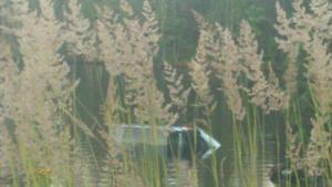 Det var en tyskregistrerad bil som av någon anledning kört av vägen och ner i vattnet.