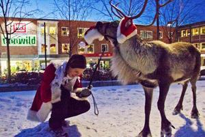 Att knycka tränaren Ulrikas Andreassons tomteluva såg ut att vara en riktig favorit för den tränade renen Rudolf.