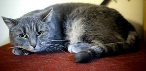 Flera av katterna blev lite trötta av uppståndelsen i samband med katthemmets ettårsjubileum.