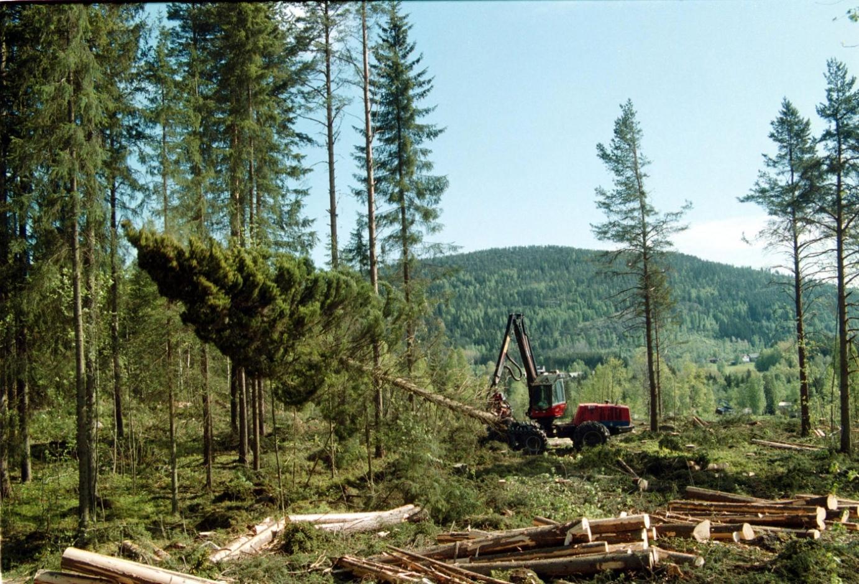 Framtida forskning far visa skogens betydelse 2