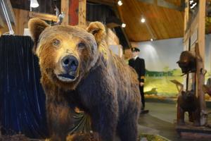 Björnen har en egen aktivitet på Ånge Naturum.