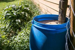 Efter en pollenrik period fylls tunnorna vid stuprören inte bara av regnvatten.