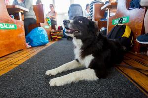 Hunden Trace ligger tryggt på Moas golv under båtfärden.