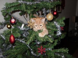 Döm om min förvåning när vår katt Tiger klättrade upp för stammen på julgranen!!! Många skratt blev det, inte minst från barnen!