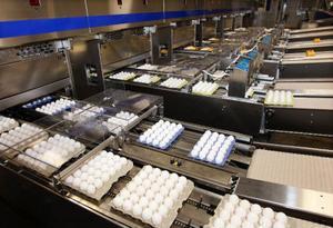 Maskinen spottar ur sig tusen tvättade och förpackade ägg i minuten och nu kan Pelle och Lisa fördubbla sin produktion.