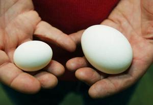 10 procent av äggen sorteras bort. Bland annat de som är för stora eller för små.