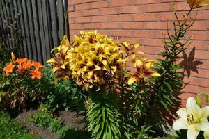Blomsterprakt i Vretstorp