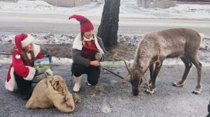 Vem har svårt att inte tro att tomten finns när i alla fall en av hans renar, Dunder, besökte sjukhuset i Östersund.