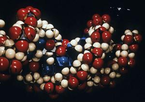 Modell av DNA-molekyl.