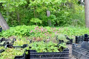 Ett hundratal planterade blomväxter och en naturlig dunge bevarad.