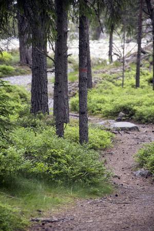 Stigen slingrar från parkeringen till revet, genom trolska skogar, karga skogar och över klapperstensfält.