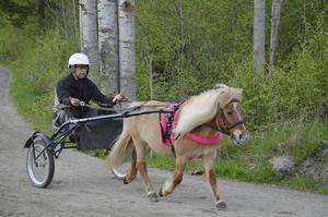 Robert Mårtensson tycker att fler borde prova på travsporten.