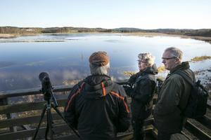 Ylva och Sten Hammarlund från Falun skådade fåglar runt Limsjön under lördagen.