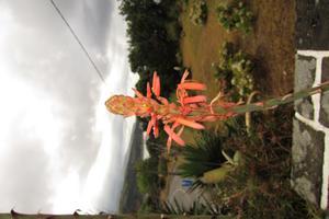 Från semester på Azorerna i september
