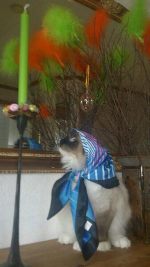 Har är Katten Diva som vill gärna flyga med till blåkulla.