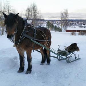 Häst och vagn är ett sätt att utforska glesbygden och fungerar både sommar som vinter.