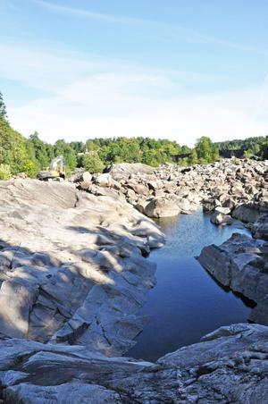 I den här gropen brukar hundratals fiskar fastna när Vattenfall stänger dammluckorna efter att vatten släppts förbi kraftverket.
