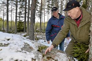 """Rune Söderberg tar bort snön ur """"fotsteget"""" på Änglastenen. Enligt gammal folktro har en ängel eller en jätte klivit på stenblocket medan den fortfarande var mjuk. Bredvid står Per Bergström."""