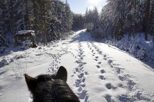 Ungefär här märkte Ulrika Ellgren att hennes sambos hundar betedde sig konstigt under en ridtur. Plötsligt kom de mycket närmare henne och hästen Fjallfrid. När de kommit bortom kröken upptäckte det anledningen: två vargar stod öga mot öga med dem.