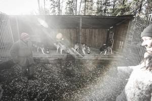 Clarie och Richard Reese har hundstallar både uppe på Skuttorpet där de bor och nere i byn Huså.