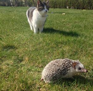 Hedvig fick vara ute för första gången i det strålade vädret och självklart var bästa kompisen med och höll koll på henne.
