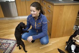 Pudeln Stina blir kaxigare och kaxigare för var dag som går i nya hemmet. Denise Brismo tycker att hunden har haft förvånansvärt enkelt att anpassa sig till sin nya familj med småbarn och stora hundar.